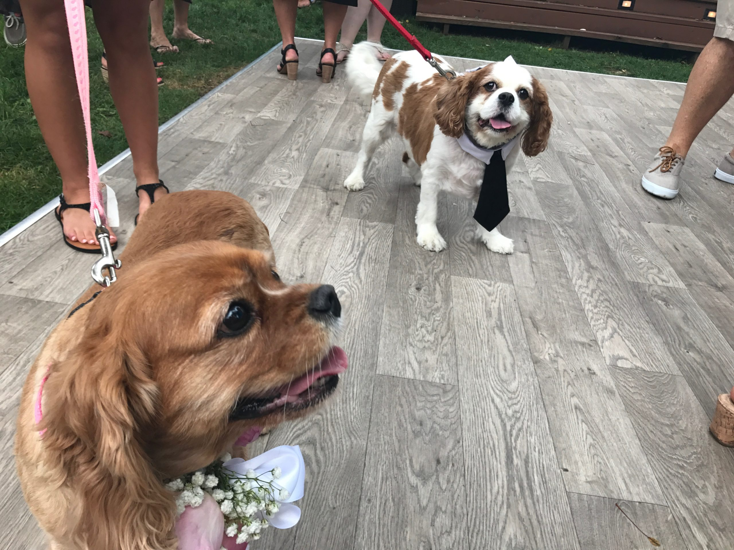 I Love a Pet Friendly Wedding!
